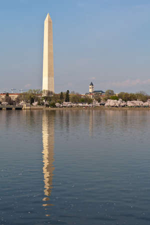 Cherry blossoms around the Tidal Basin in Washington DC with the Washington Monument reflected in the water. Stock Photo - 12981776