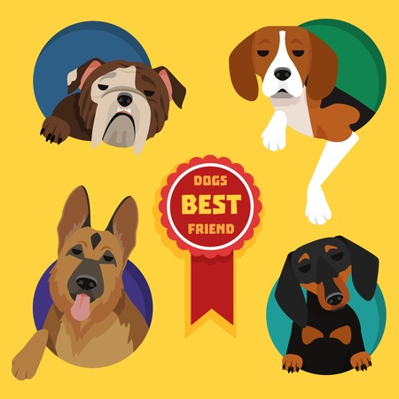 Set of different dog breeds. German Shepherd, Dachshund, English bulldog, Beagle
