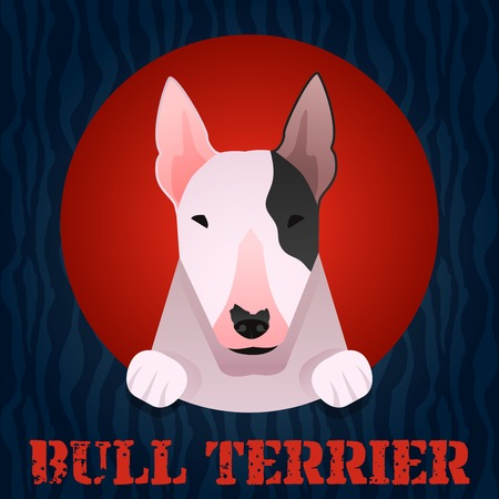 Bull terrier portrait in flat style. Vector Illustration