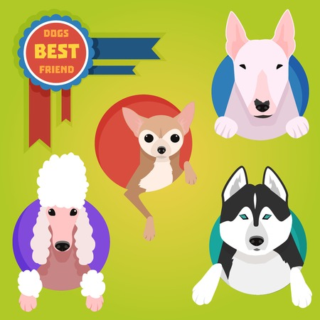 Set of different dog breeds. Husky, bullterrier, poodle and chihuahua