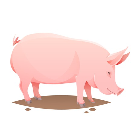 Pink farm pig on white background. Vector Illustration