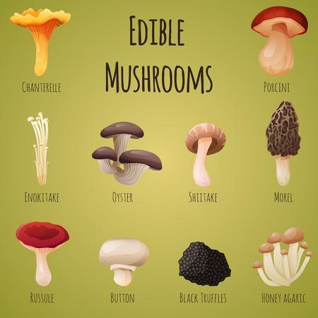 Edible mushroom 10 items set. Vector Illustration