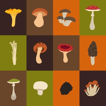 morel: Mushroom set with flat design. Vector Illustration Illustration
