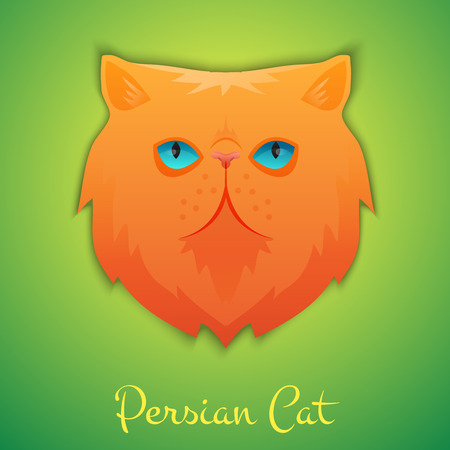 persian: Persian cat face isolated with shadow. Vector illustration