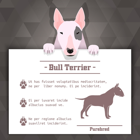bull terrier breed dog banner with text. Vector Illustration