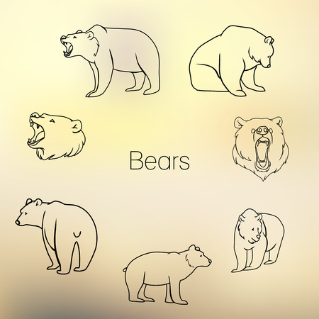jaw: Set of different bears with grunge design. Vector illustration Illustration