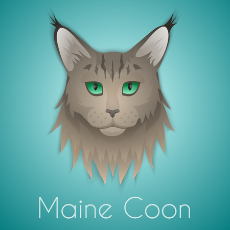coon: Maine coon face on background. Vector illustration