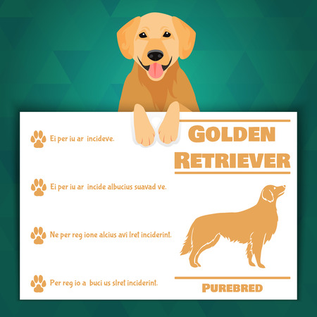 characteristics: Golden retriever breed dog banner with text. Vector Illustration