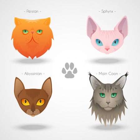 coon: Different luxury cat breeds faces set. See more illustrations in my portfolio. Illustration