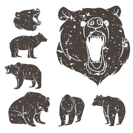 bear silhouette: Set of different bears with grunge design. Vector illustration Illustration