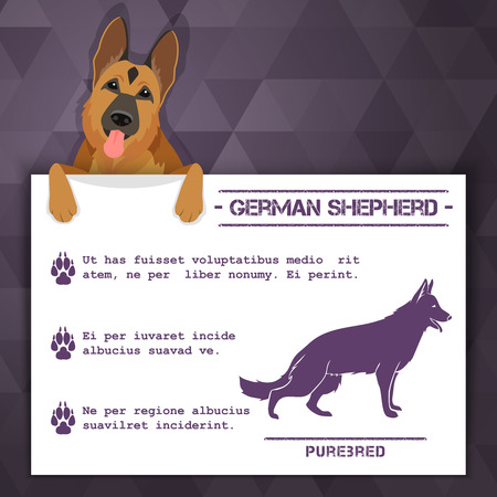 breed: german shepherd breed dog banner with text. Vector Illustration