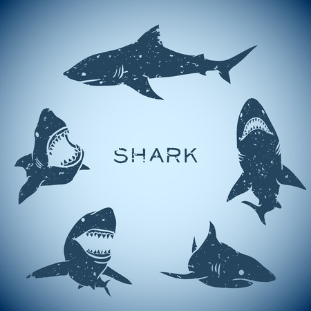 group of sharks concept background. Vector illustration Vectores