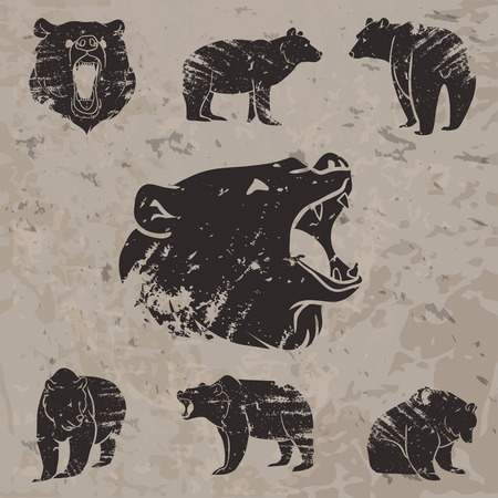 grizzly: Ensemble de différents ours avec conception grunge. Vector illustration