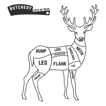 wild venison: Deer meat cuts with elements and names. Butcher shop. Vector illustration.