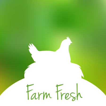 hen  farm: Silhouette of farm Hen black with text inside on blur background. Vector illustration Illustration