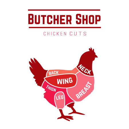 Cuts of chicken butcher diagram. Vector illustration Illustration