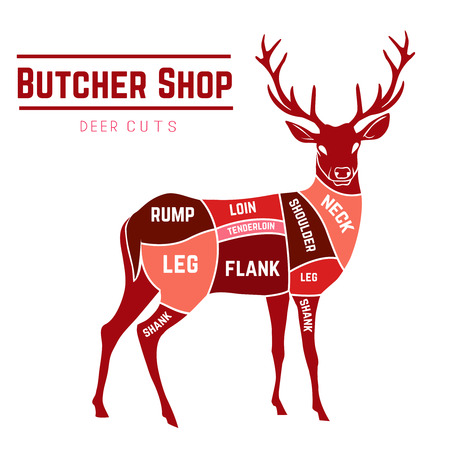 wild venison: Deer meat cuts with elements and names in color for Butcher shop Illustration
