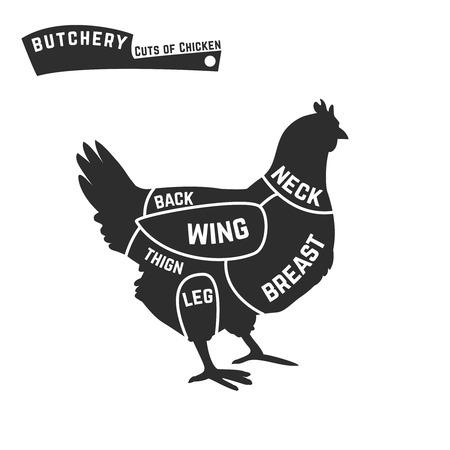 Cuts of chicken butcher diagram illustration