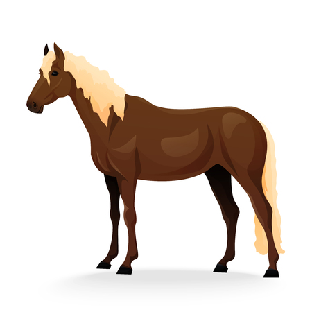 gelding: Realistic horse with red coat. Vector illustration