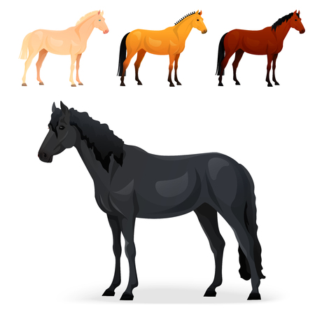 gelding: Set of realistic horse with different coats. Vector illustration