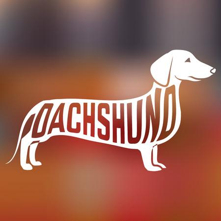 badger dog: Creative design of name of breed inside dog silhouette on colorful blurred background.  Illustration