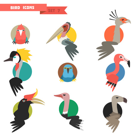Exotic tropical bird set with flat design. Parrots and flamingo with ostrich. Vector illustration