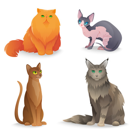 Different luxury cat breeds set. Vector illustration Иллюстрация