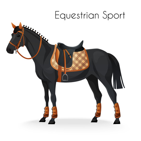 saddle: Horse with equestrian sport equipment. vector illustration