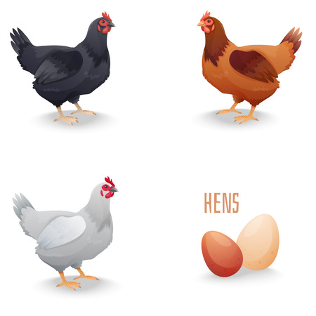 Set of hens different breed with eggs. isolated. Vector illustration