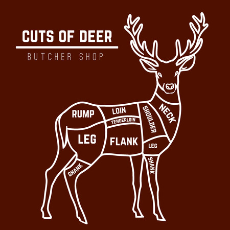 wild venison: Deer meat cuts with elements and names in color. Butcher shop. Vector illustration.