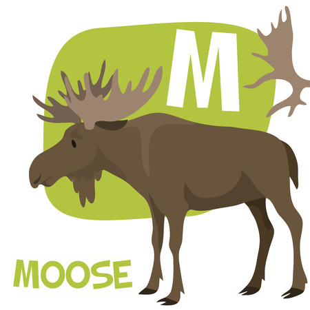 Funny cartoon animals vector alphabet letter for kids from A to Z. M is Moose. Vector illustration