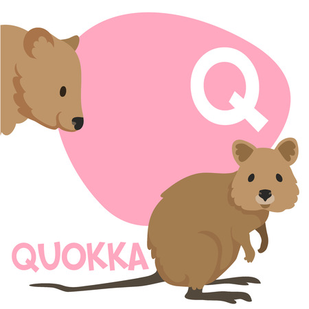 Funny cartoon animals vector alphabet letter for kids from A to Z. Q is Quokka. Vector illustration Иллюстрация