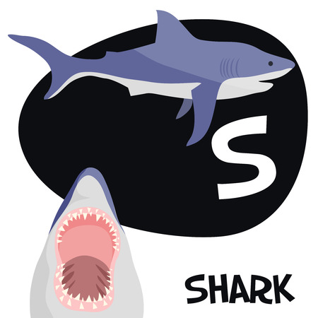children s book: Funny cartoon animals vector alphabet letter for kids from A to Z. S is Shark. Vector illustration