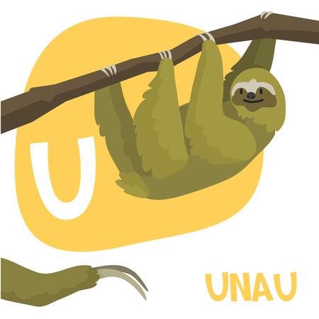 oso perezoso: Animales del dibujo animado letra del alfabeto vector divertido para los niños de la A a la Z. U es unau. Ilustración vectorial