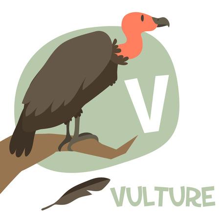 v alphabet: Funny cartoon animals vector alphabet letter for kids from A to Z. V is Vulture. Vector illustration Illustration