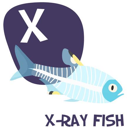 面白い漫画動物のベクトルのアルファベット A から Z への子供のため、x 線魚です。ベクトル図