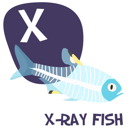 animals x ray: Funny cartoon animals vector alphabet letter for kids from A to Z. X is x-ray fish . Vector illustration Illustration