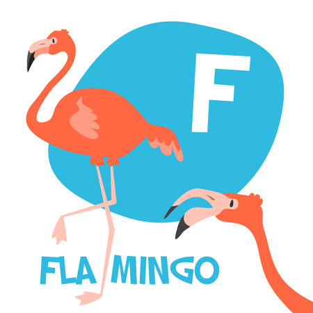 Funny cartoon animals vector alphabet letter for kids from A to Z. F is flamingo. Vector illustration