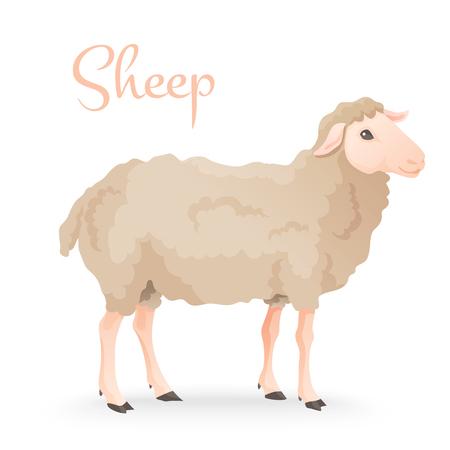oveja: Realisic lindo ovejas de pie en el foie con la granja en el fondo. Ilustración vectorial Vectores