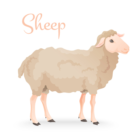 Realisic cute sheep standing on the gras with farm on background. Vector Illustration