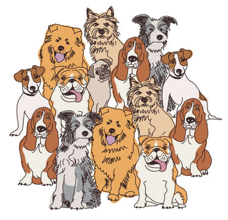 Big group of different dogs separated on white background. Color vector illustration.