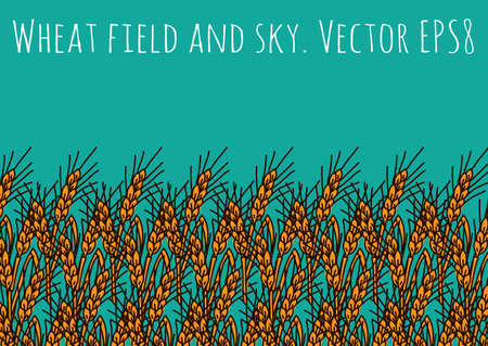 Gold wheat rye field and blue sky. Stock Photo