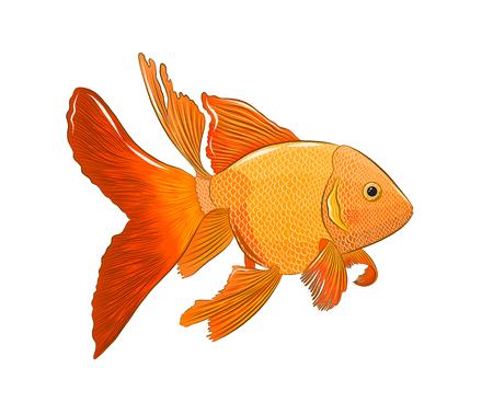 fabulous sea goldfish Vecteurs