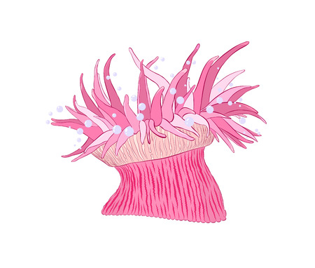 sea anemone pink sea