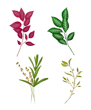 branches of different plants