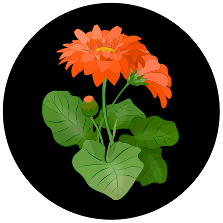flower of gerbera orange 向量圖像