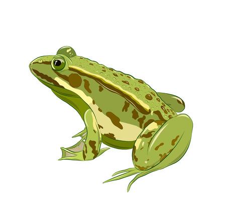 sapo verde con verrugas Ilustración de vector