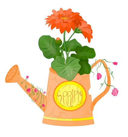 orange lake orange flower gerberas
