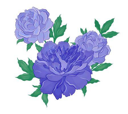 beautiful big blue peonies vector