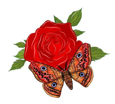orange butterfly with red rose
